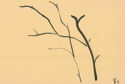 Branches Study (1) - India Ink