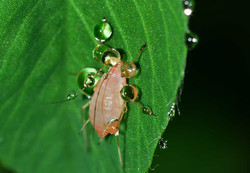 insects-563256_1280