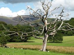 tree-14429_640
