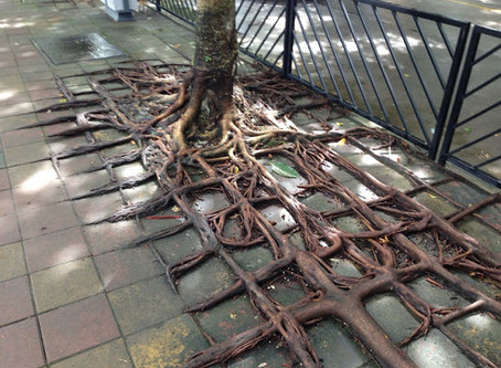 ROOTS SEARCH FOR NEW AVENUES FOR NOURISHMENT AND GROWTH CONSTANTLY
