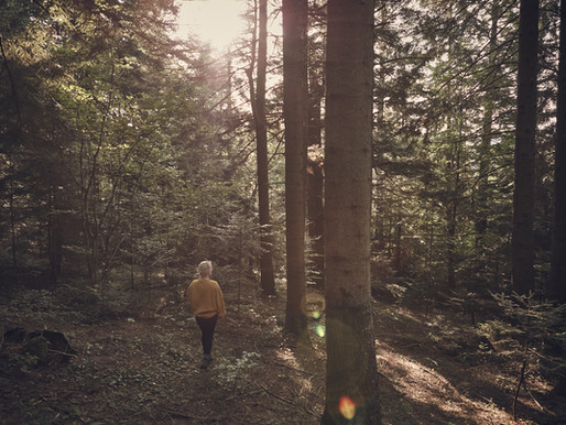 Mindfulness Hikes: Why Wouldn't We?