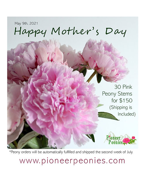 Mother's Day Special - 30 Premium Pink Peony Stems