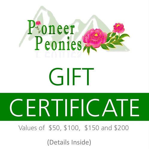 Gift Certificate - Starting at $50