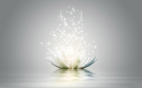white_lotus.jpg