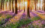 healing_light_grief_nature.jpg
