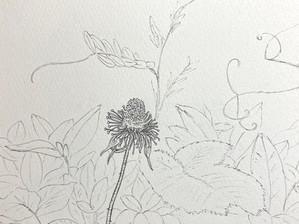 DAY 97 Rubus hirsutus