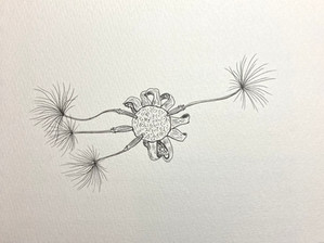 DAY 59  Dandelion