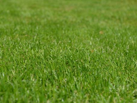 Een gezonde grasmat, een genot in het zomerseizoen!