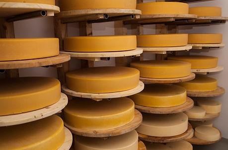 Roți de brânză maturată