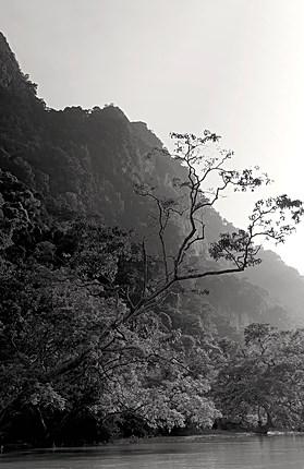 Végétation au bord du lac de Thac Ba - Nord Vietnam