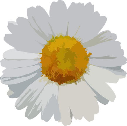 flower-1837356.png