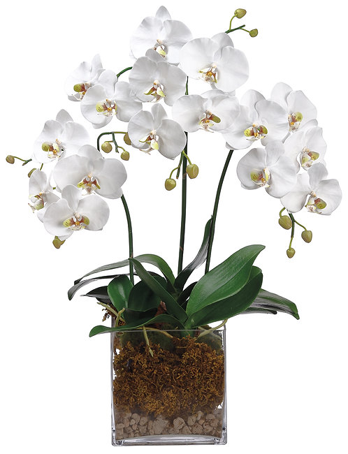 "31"" White Phalaenopsis Orchids in Glass Vase"