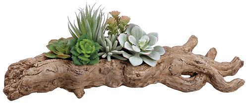 "6.5"" Succulent Garden in FauxWood Planter"