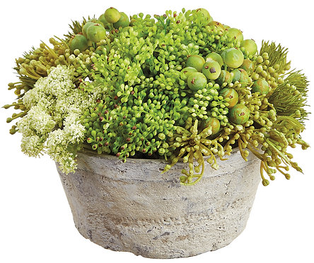 "6"" Sedum/Berry Arrangement in Clay Pot - Monthly Rental (Qty 2)"