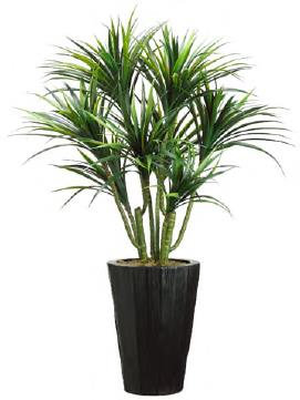 Dracaena in Metal Container