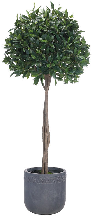 "70"" Bay Leaf Topiary in Fiber Clay Planter"