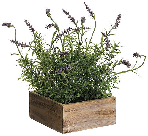 """12"""" Lavender in Wood Pot - Monthly Rental (Qty 2)"""