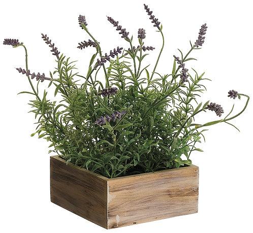 "12"" Lavender in Wood Pot"