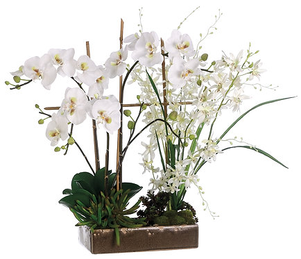 "26"" Orchid/Dendrobium in Ceramic Dish - Monthly Rental"