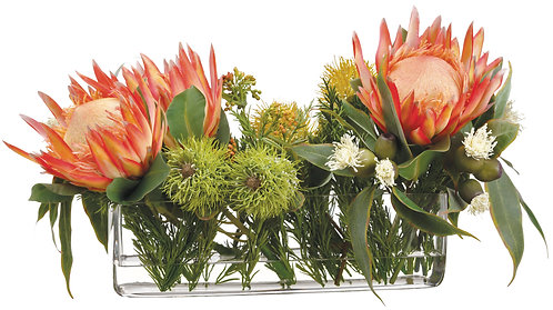 Protea and Ecualyptus in Glass Vase Orange - Monthly Rental