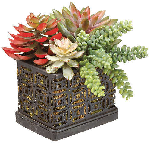 Succulent Garden in Metal Planter