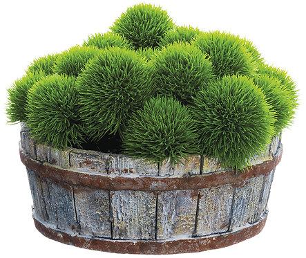 """6"""" Grass Ball in Cement Pot"""