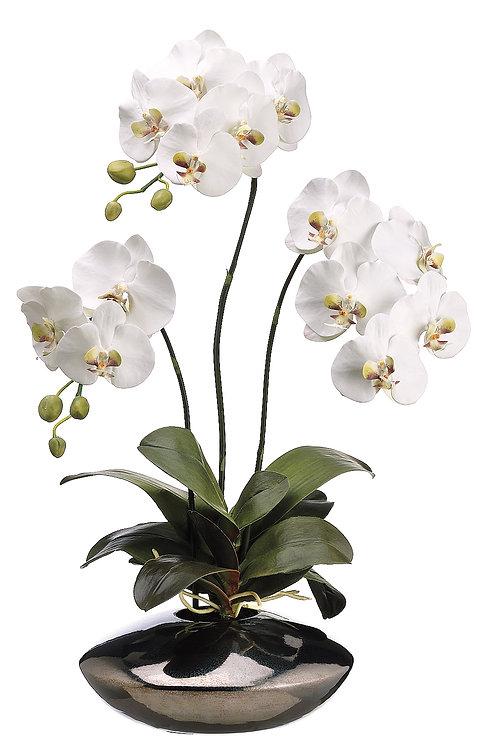 "31"" White Phalaenopsis Orchidsin Ceramic Pot"