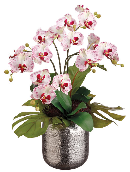 Bird's Nest Leaf and Phalaenopsis in Silver Ball - Monthly Rental
