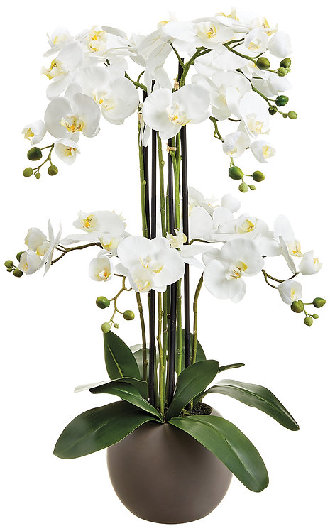 "33"" White Phalaenopsis Orchids in Terra Cotta Vase"