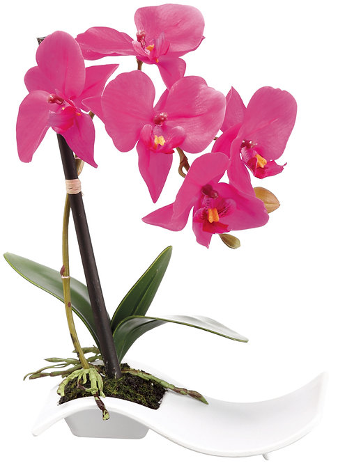 "10"" Phalaenopsis Orchids in White Plastic Plate - Monthly Rental (Qty 2)"