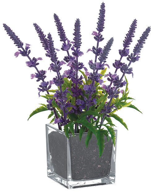 """10"""" Lavender in Glass Vase - Monthly Rental (Qty 2)"""