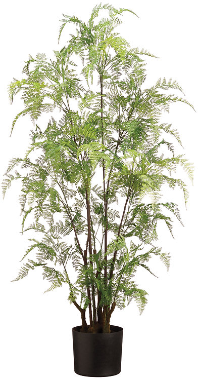 "48"" Green Lacy Leather Fern in Pot - Monthly Rental"