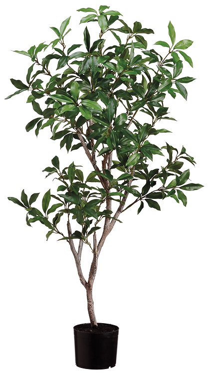 4' Laurel Tree in Pot - Monthly Rental