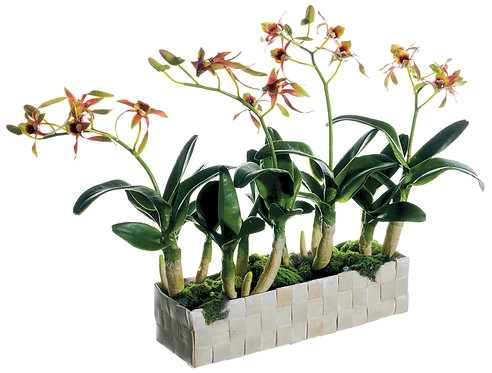 "13"" Green Dendrobium Orchid Plantin Basket - Monthly Rental"