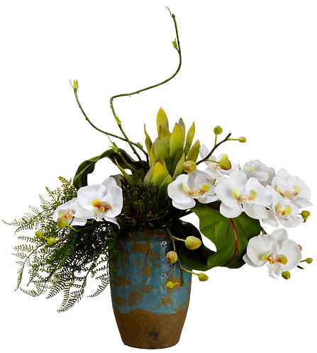 Phalaenopsis Orchid and Protea in Terra Cotta Container