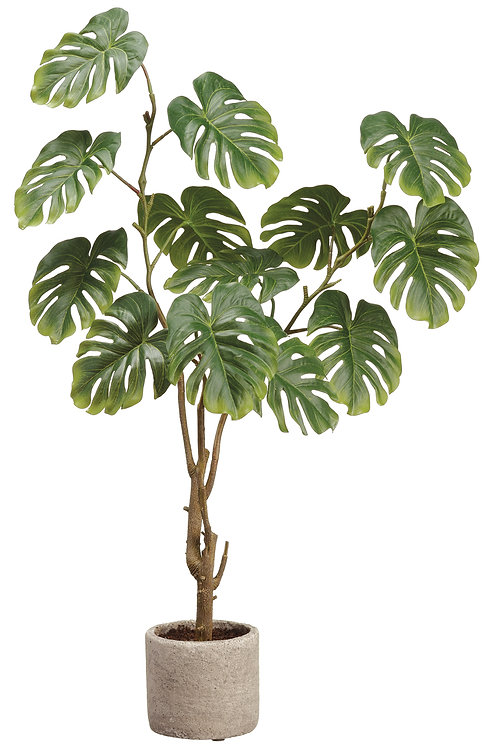"28"" Split Philodendron Plant in Cement Pot"