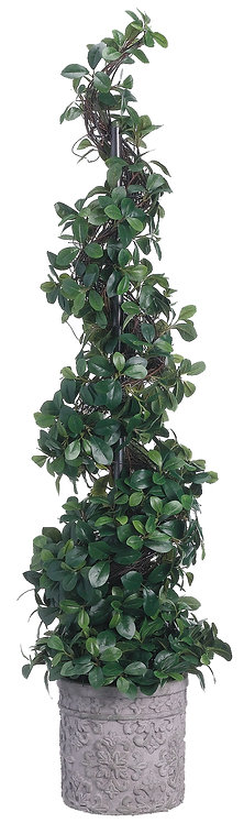Citrus Leaf Spiral Topiary in Terra Cotta Planter - Monthly Rental