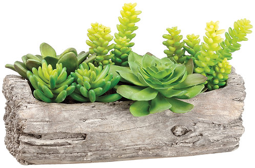 """8"""" Succulent Garden in Log"""