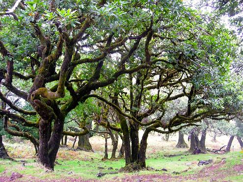 Madeira 109.png