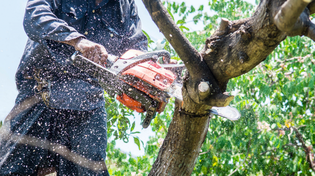 Mistakes Homeowners Make Trimming Trees