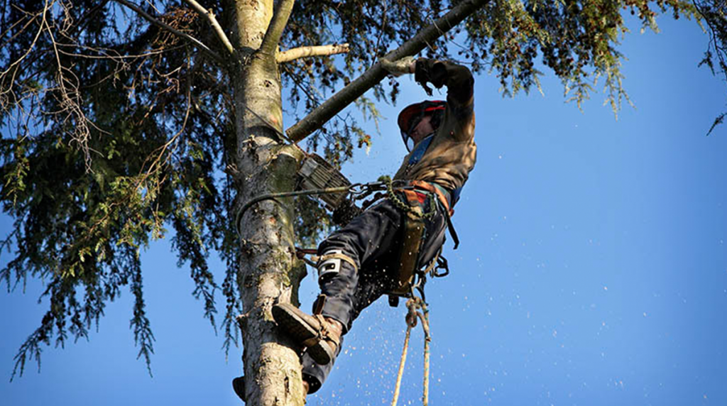 5 Questions to Ask an Arborist