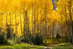 Crystal Aspen grove