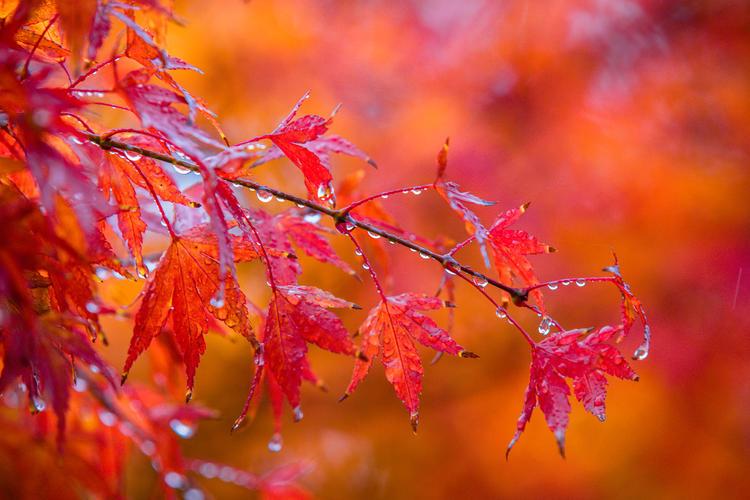 Autumn Dewdrops