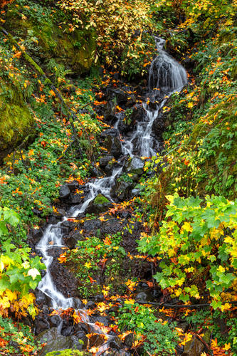 Ainsworth Stream