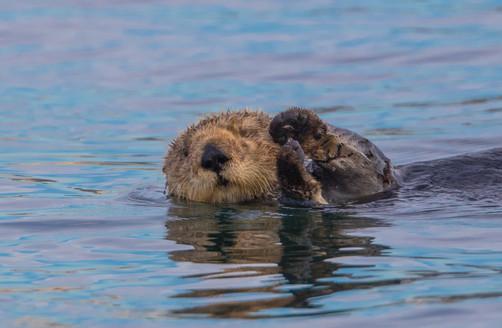 Otter prayers.jpg