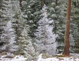 December Main Photo