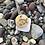 Thumbnail: Pesce - Fish Pendant Necklace