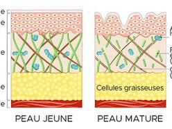 La cosmétique du collagène : l'actif anti-âge clé au Japon