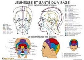 Table des points et muscles du visage