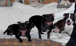 Gem, Vicky & Zoey.jpg